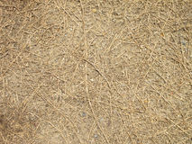 Dry brown grass on the ground Stock Images
