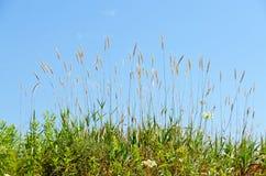 Dry brown grass Stock Photos