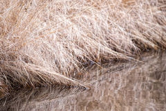 Dry brown grass at waters edge Royalty Free Stock Photography