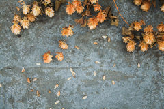 Dry brown hop cones  on concrete background. Brewing. Beer ingre Royalty Free Stock Photography