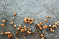 Dry brown hop cones  on concrete background. Dry brown hop cones on concrete background. Brewing. Beer ingredient. Top view. Natural colours. Free space for Stock Photo