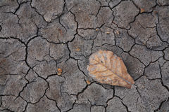 Dry brown leaf on cracked earth Royalty Free Stock Images