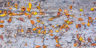 dry brown leaf on the cracked earth, Drought land Stock Photos