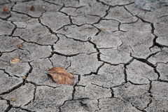 Dry brown leaf on the cracked earth Royalty Free Stock Image