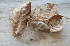 Dry brown leaf decompose structure on wooden board Royalty Free Stock Photography