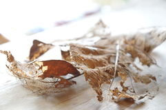 Dry brown leaf decompose structure on wooden board Stock Photos