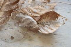 Dry brown leaf decompose structure on wooden board Stock Photography
