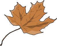Dry brown leaf. An illustratin of a dry brown autumn leaf Stock Image