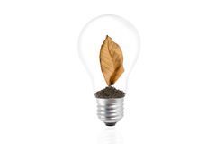 Dry brown leaf in a light bulb. Stock Images