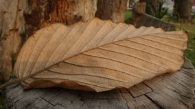 Dry brown leaf on the log Royalty Free Stock Photo