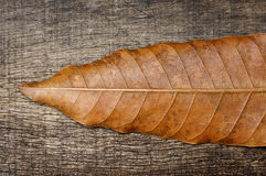 Dry brown leaf on the old wooden background. Dry brown leaf tips on the background of old wooden cracked Stock Photo