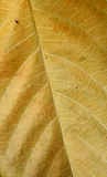 Dry brown leaf texture Stock Images