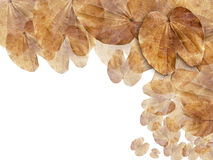 Dry brown leaf web page background Royalty Free Stock Photo