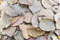 Dry brown leaves on ground. Stock Photos