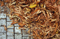 Dry, brown leaves on a sidewalk Stock Images