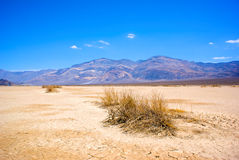Dry Brush in Death Valley. Dry brush sits on the ancient lakebed of Death Valley National Park in California Royalty Free Stock Images