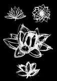 Dry brush  lotus set. Vector hand drawn dry brush only contour  lotus set Stock Photography