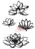 Dry brush  lotus set. Vector hand drawn dry brush  lotus set with paint splash Royalty Free Stock Photos