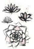 Dry brush  lotus set. Vector hand drawn dry brush  lotus set with paint splash Stock Photos