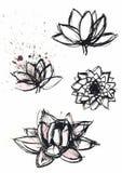 Dry brush  lotus set. Vector hand drawn dry brush  lotus set with paint splash Royalty Free Stock Images