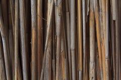 Dry Bulrush Background Stock Image