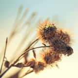 Dry bur at sunset Royalty Free Stock Photos