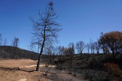 Dry burnt California hillside charred and devastated by a forest wildfire Royalty Free Stock Photos