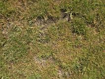 Dry burnt dead grass on hard dry clay, natural background. Dry brown green carpet royalty free stock photo