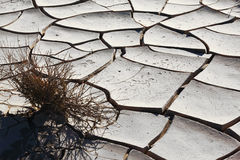 A dry bush Royalty Free Stock Image