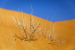 Dry bush in the desert Stock Photo