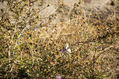 Dry Bush. Royalty Free Stock Images