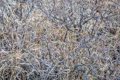 Dry bush and grass Stock Image