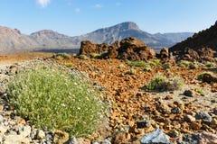 Dry bush growing in the caldera of a El Teide volcano Stock Images