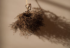Dry bush Royalty Free Stock Image