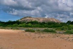 Dry bush with rock on horizon