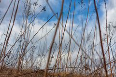 Dry bushes Royalty Free Stock Image