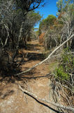 Dry bushland. Australian bushland, dry earth and trees, nature Royalty Free Stock Photo