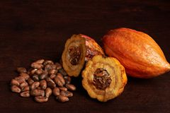Dry cacao seeds with open fruit. Dry cacao seeds with open cocoa pod fruit lay on wooden desk Stock Image