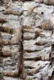 Dry cactus Stock Image