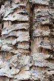 Dry cactus Royalty Free Stock Photo