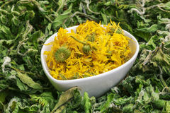 Dry calendula in bowl with green dry herbs around Royalty Free Stock Photos