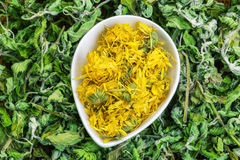 Dry calendula with green dry herbs around Royalty Free Stock Photography