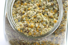 Dry camomile Royalty Free Stock Image