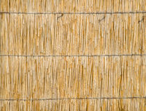 Dry cane background. Stock Photos