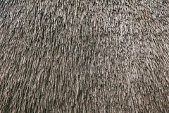 Dry cane background. Roof of a house of reed Royalty Free Stock Photos