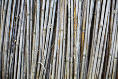 Dry cane Stock Images
