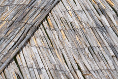 Dry cane Royalty Free Stock Image