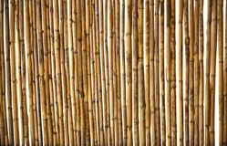 Dry cane texture background Royalty Free Stock Images