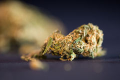 Dry cannabis bud Stock Image