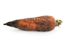 Dry carrot Stock Images